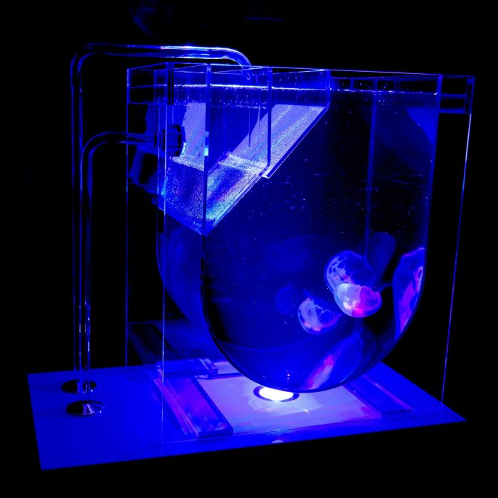 Medusa 45 Jellyfish Aquarium