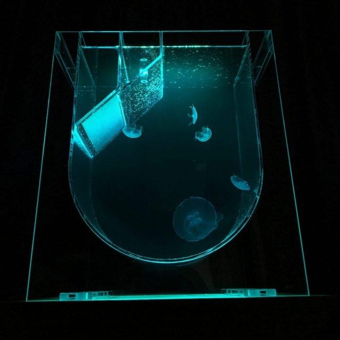 Medusa Desktop Jellyfish Tank with green lighting
