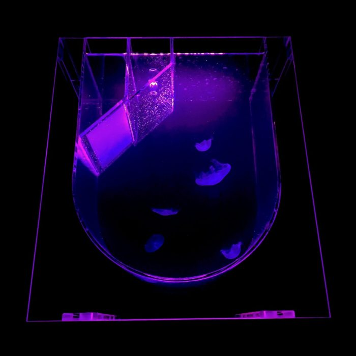 Medusa Desktop Jellyfish Tank with purple lighting