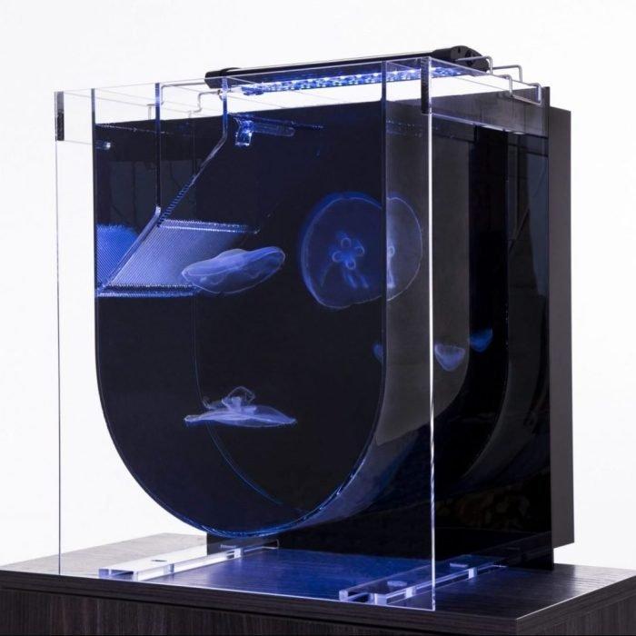 UK Jellyfish Photography