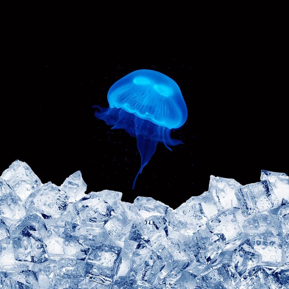 frozen moon jellyfish as food